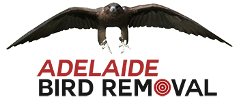 Adelaide bird removal